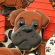 Boxer Cookie